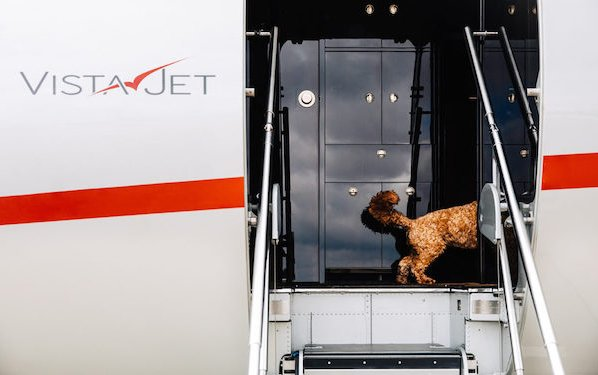 Global pet travel program - ask VistaPet how to do your best