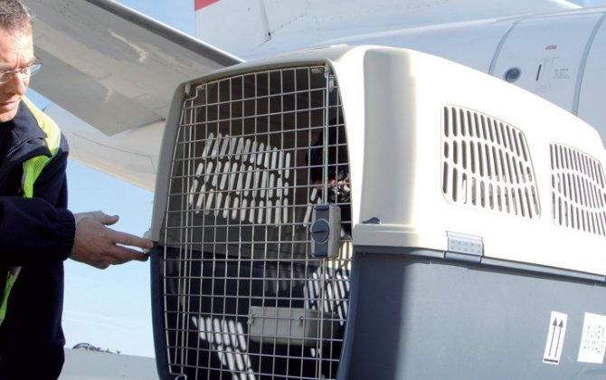 IATA Launches Certification Program for Animals Travelling by Air