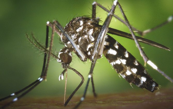 MEDAIRE shares latest on ZIKA-RELATED travel risks at EBACE