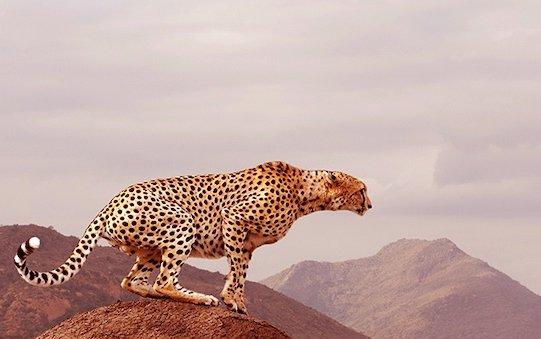 Preventing Illegal Trade In Endangered Wildlife - Qatar Airways