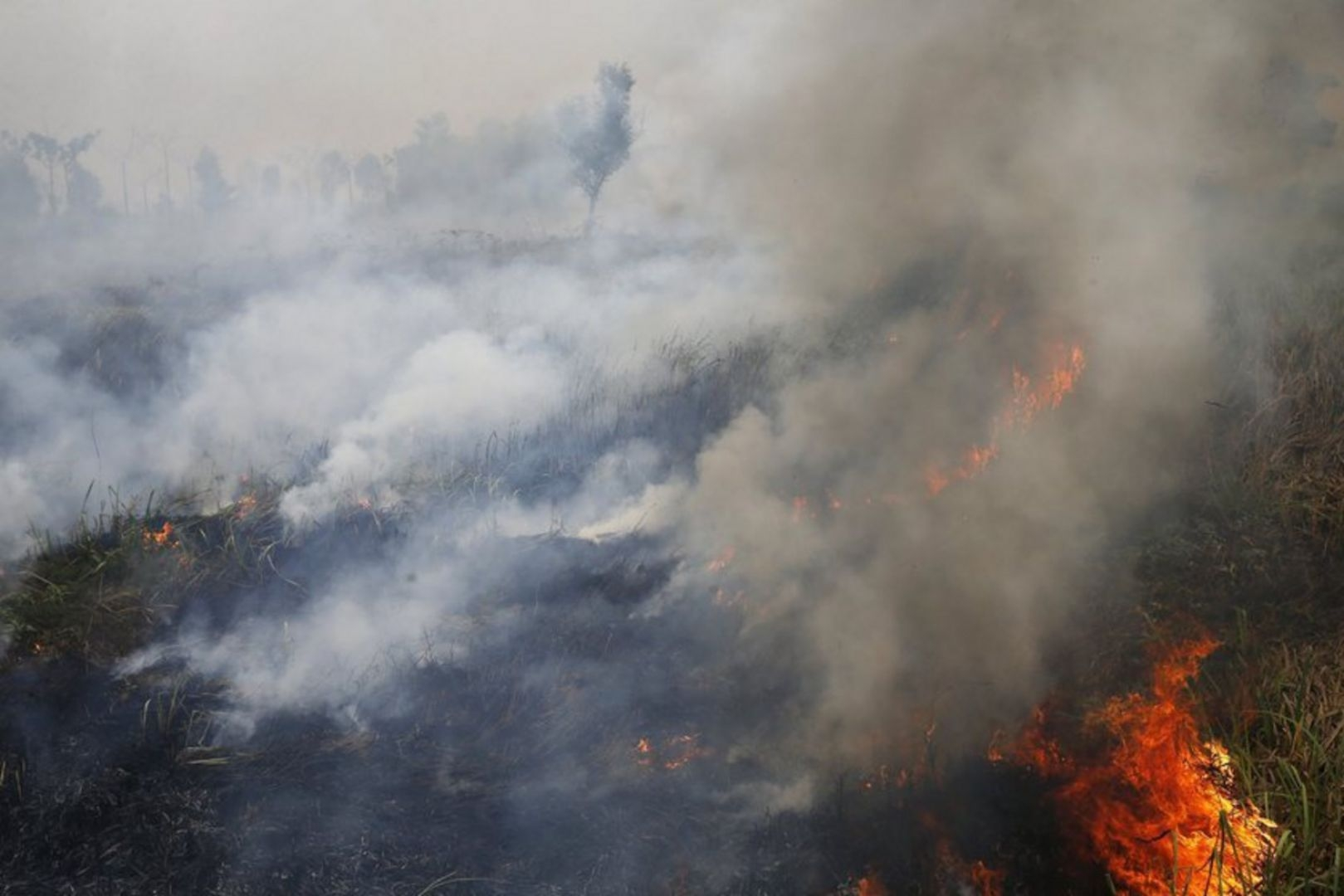 the problem of fires in indonesia and the governments stance on the issue The problem with fair trade coffee  businesses obtain special privileges from local governments  that create a quality problem for fair trade coffee.